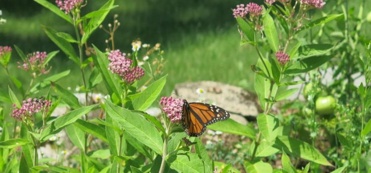 Neighbor spotlights: From the prairie to the East