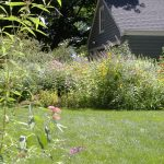 Lawns and Groundcovers