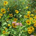 Flowering Plants, Trees, Shrubs, and Vines
