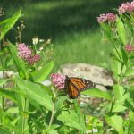 Protecting Pollinators with a Non-Toxic Yard